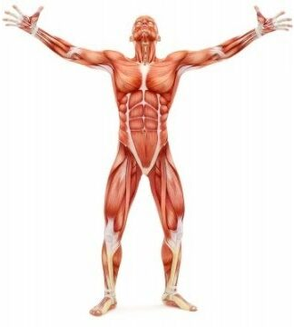 Best way to gain muscle strength. A scientific perspective.