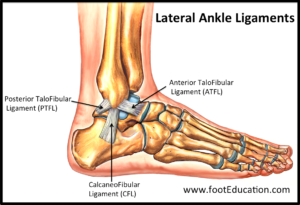 for ankle blog